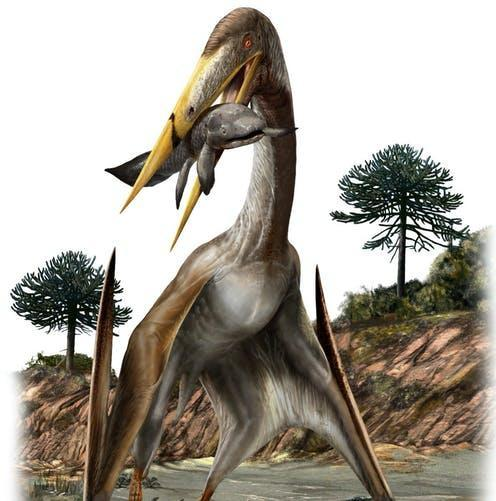 """<span class=""""caption"""">The azhdarchid pterosaur, the largest flying animal ever known.</span> <span class=""""attribution""""><span class=""""source"""">Davide Bonadonna</span>, <span class=""""license"""">Author provided</span></span>"""