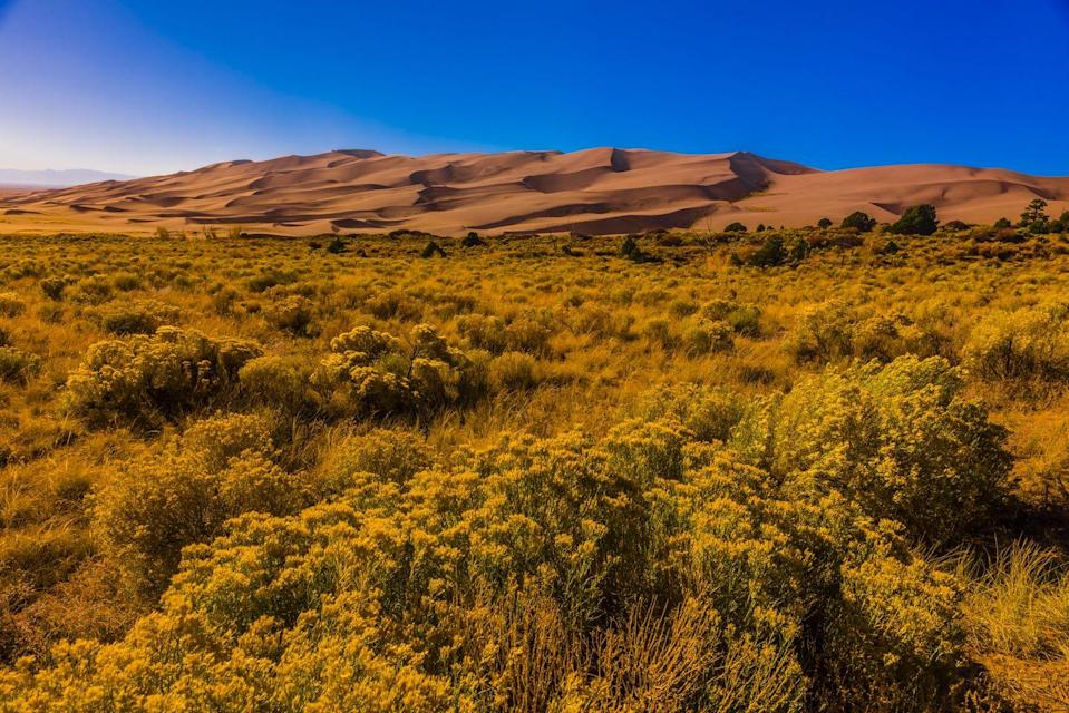 """<p>The biggest sand dunes won't be found on the shores of the Pacific or the Atlantic, but near the town of Mosca, Colorado. That's where you'll find the <a href=""""https://www.nps.gov/grsa/index.htm"""" rel=""""nofollow noopener"""" target=""""_blank"""" data-ylk=""""slk:Great Sand Dunes"""" class=""""link rapid-noclick-resp"""">Great Sand Dunes</a>, the tallest dunes in North America. See the Star Dune, which is THE tallest, standing at about 750 feet high.</p>"""