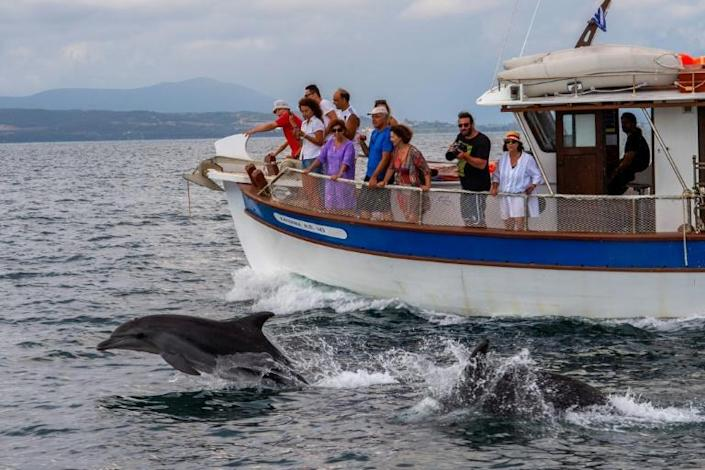 Dolphin watching is one of the activities on offer for tourists in Greece's Ambracian Gulf, which boasts a protected wetlands area