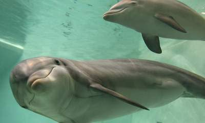 Gulf Coast Police Looking For Dolphin Killer