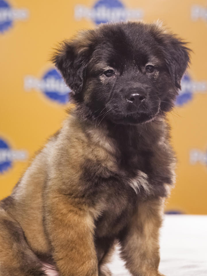 Name: Arlo