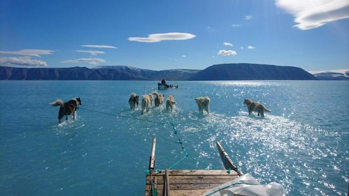 Sled dogs wading through standing water on the sea ice during an expedition in North Western Greenland (AFP Photo/Steffen Olsen)