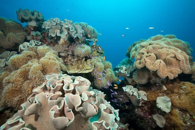 A Giant Raft of Volcanic Rock From an Underwater Eruption Could Help Revive the Great Barrier Reef