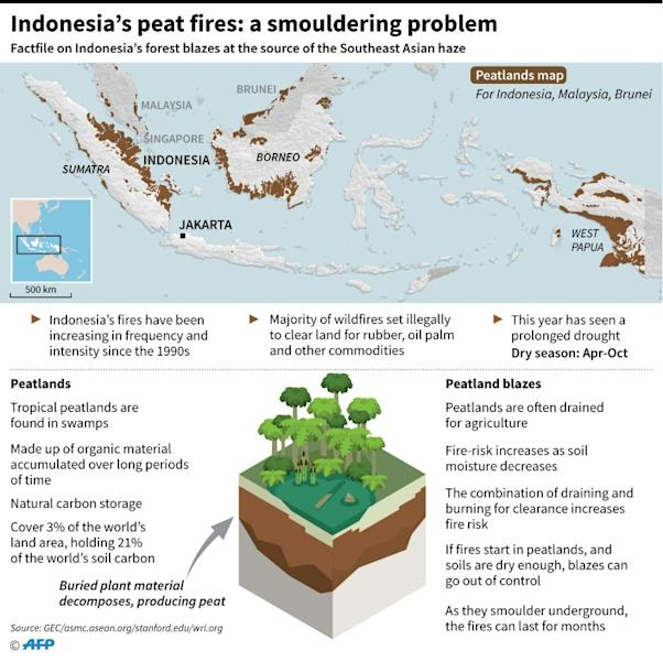 Graphic factfile on Indonesia's peatlands and forest fires. (AFP Photo/John SAEKI)