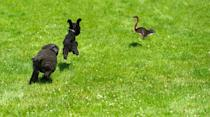 These friends have learned how to synchronize hops!