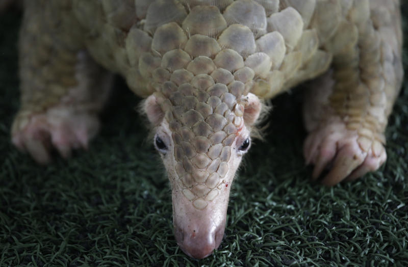 Singapore makes second huge seizure of pangolin scales in days