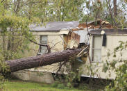 A mobile home is destroyed by a fallen tree, Friday, Aug. 28, 2020, in Westlake, La., as clean up efforts continue following Hurricane Laura. (Kirk Meche/American Press via AP)