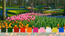 """<p>Dubbed as being """"the most beautiful spring garden in the world"""", Keukenhof Gardens boasts more than seven million blooms, including tulips, hyacinths, daffodils, orchids, roses, carnations, irises and lilies. </p>"""