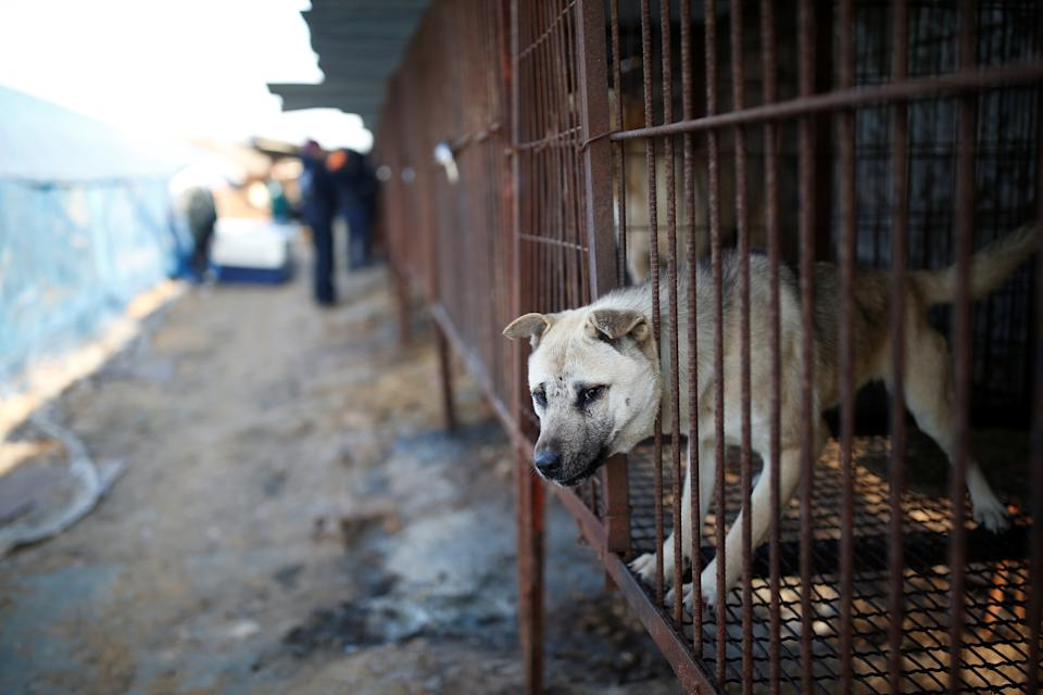 A dog is pictured in a cage at a dog meat farm in Wonju, South Korea, January 10, 2017.  REUTERS/Kim Hong-Ji