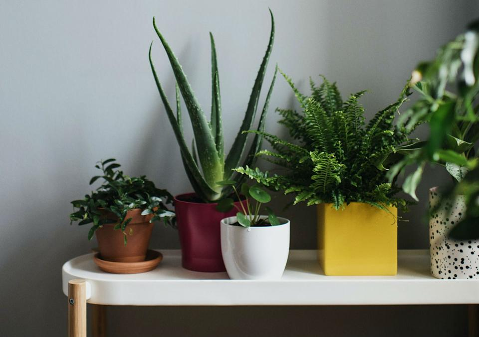 10 Indoor Plants To Infuse Natural Greens Into Your Home Decor