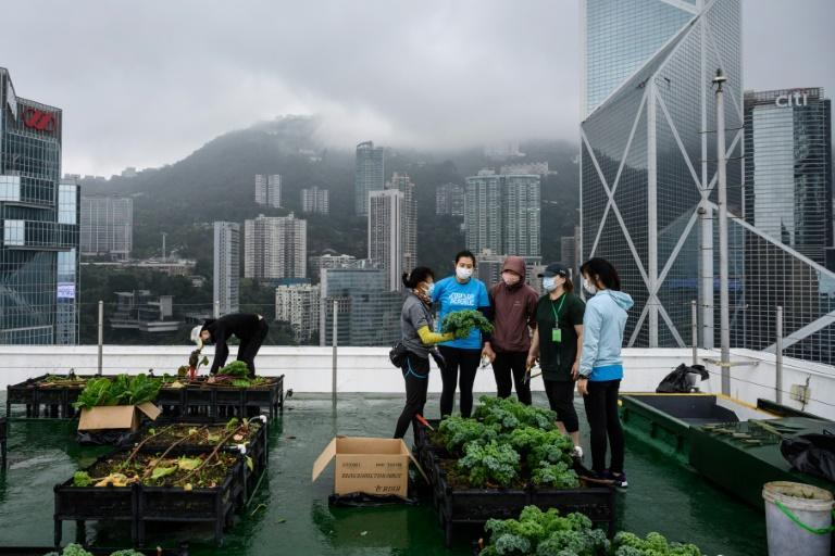 More than 60 urban farms have sprouted across space-starved Hong Kong since 2015 -- on decommissioned helipads, shopping mall rooftops and public terraces -- thanks to initiatives like Rooftop Republic
