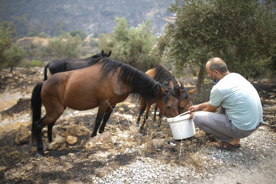 A man gives water to wilde horses in Akcayaka village in Milas area of the Mugla province, Turkey, Friday Aug. 6, 2021. Thousands of people fled wildfires burning out of control in Greece and Turkey on Friday, as a protracted heat wave turned forests into tinderboxes that threatened populated areas, electricity installations and historic sites. (AP Photo/Emre Tazegul)