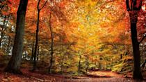 """<p>Crisp air and golden hues officially welcome fall each year in late September. As the green leaves start turning to beautiful shades of red, orange and yellow, it'll be time to don your comfiest <a href=""""https://www.goodhousekeeping.com/beauty/fashion/g28209987/cute-fall-sweaters/"""" rel=""""nofollow noopener"""" target=""""_blank"""" data-ylk=""""slk:fall sweater"""" class=""""link rapid-noclick-resp"""">fall sweater</a> and head outside to capture every moment of the season — which of course means heading to the <a href=""""https://www.goodhousekeeping.com/holidays/halloween-ideas/g23480666/pumpkin-patch-near-me/"""" rel=""""nofollow noopener"""" target=""""_blank"""" data-ylk=""""slk:nearest pumpkin patch"""" class=""""link rapid-noclick-resp"""">nearest pumpkin patch</a> and taking in the <a href=""""https://www.goodhousekeeping.com/life/travel/g27922259/fall-colors/"""" rel=""""nofollow noopener"""" target=""""_blank"""" data-ylk=""""slk:best fall foliage"""" class=""""link rapid-noclick-resp"""">best fall foliage</a>, all while sipping on a nice, warm mug of pumpkin spice latte! To help you appreciate the autumn season even more, we've rounded up the best fall quotes as a tribute to the best — and coziest — time of the year. </p><p>From motivational sayings from books to poetic passages from authors and poets, these <a href=""""https://www.goodhousekeeping.com/health/wellness/g2401/inspirational-quotes/"""" rel=""""nofollow noopener"""" target=""""_blank"""" data-ylk=""""slk:inspirational quotes"""" class=""""link rapid-noclick-resp"""">inspirational quotes</a> will help you usher in autumn's blue skies and falling leaves — and will effortlessly describe how it feels when the weather gets chilly and leaves start crunching at your feet. Whether you're looking for the perfect autumn quote for your <a href=""""https://www.goodhousekeeping.com/life/a28007534/fall-instagram-captions/"""" rel=""""nofollow noopener"""" target=""""_blank"""" data-ylk=""""slk:fall Instagram caption"""" class=""""link rapid-noclick-resp"""">fall Instagram caption</a> or simply want to fully get in the spirit of the season, ref"""