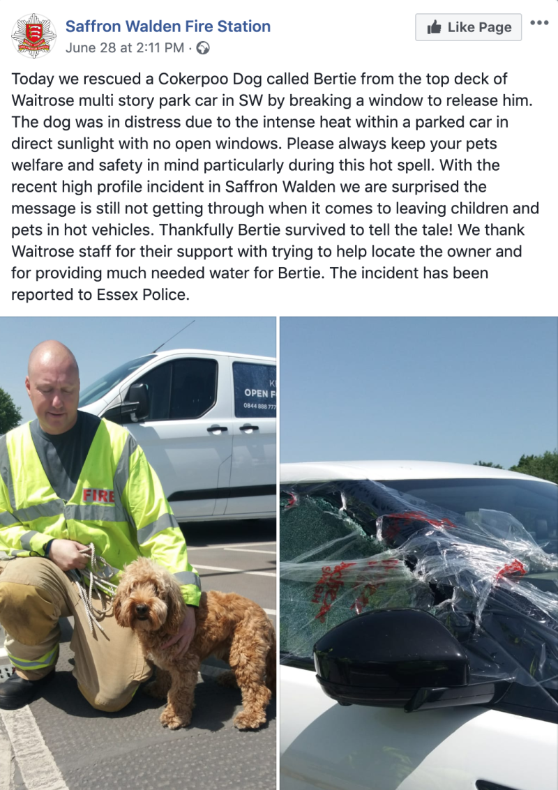 Firefighters rescue dog from car on hottest day of the year