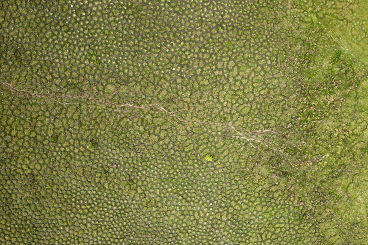 <p>This surreal aerial image was taken by a drone camera, and shows the surales of South America. (Delphine Renard/SWNS) </p>