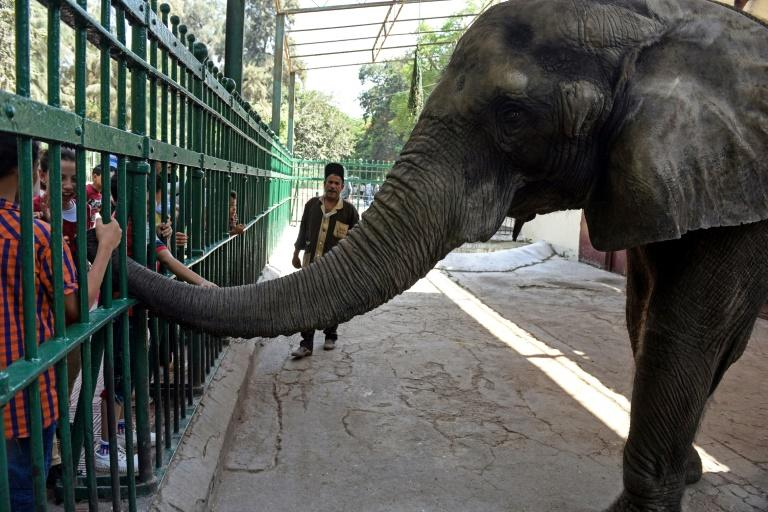 Egyptian children pet an elephant at Giza Zoo in Cairo, Africa's oldest