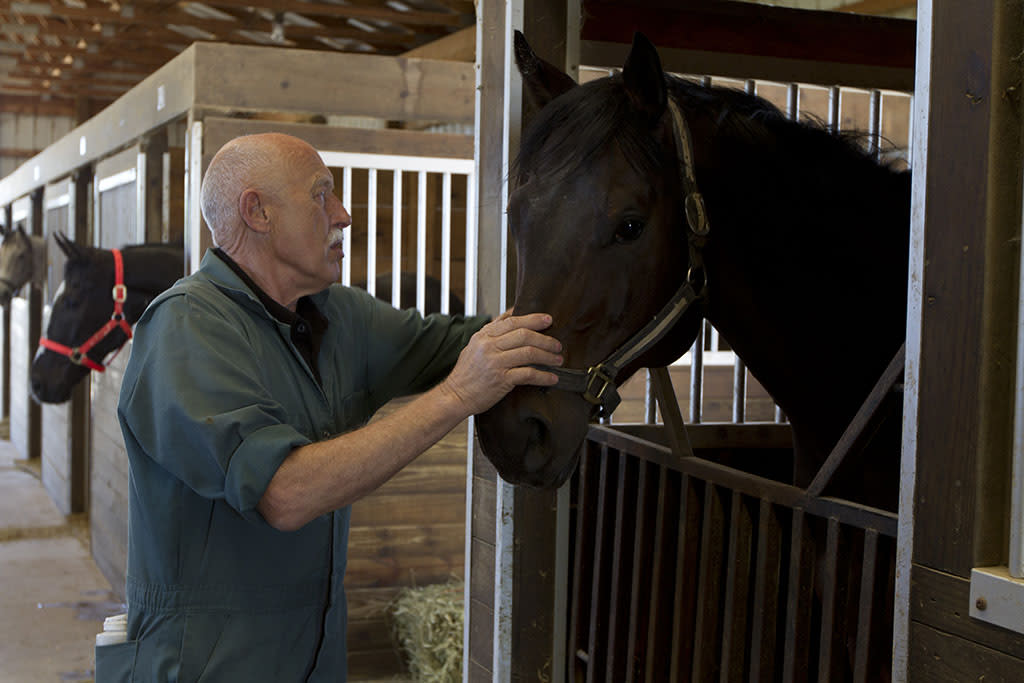 Mt. Pleasant, MI: Dr. Pol examines a horse in a stable.