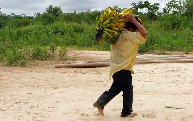 A Tsimane man carried bananas - Credit: Michael Gurven/AP