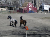 This photo taken Thursday, March 18, 2021 in Fernley, Nev. shows horses in a pen on Canal Drive next to the Truckee Canal built in 1905 to provide water for irrigation. The town founded by pioneers lured to the West a century ago with the promise of free land and cheap water is suing the U.S. government over plans to renovate the earthen irrigation canal that burst and flooded nearly 600 homes in Fernley in 2008. (AP Photo/Scott Sonner).