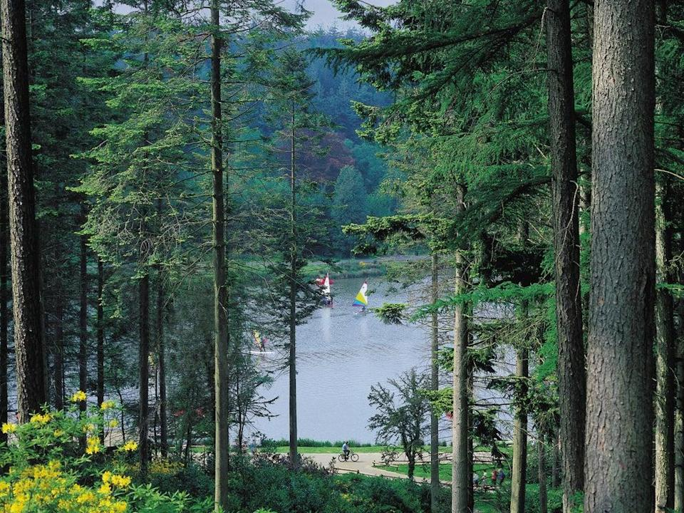 <p>Center Parcs is taking bookings from March</p> (Center Parcs)