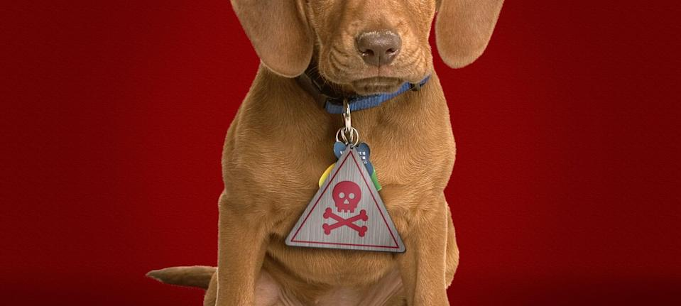 An EPA review of the safety of Seresto pet collars could take years.