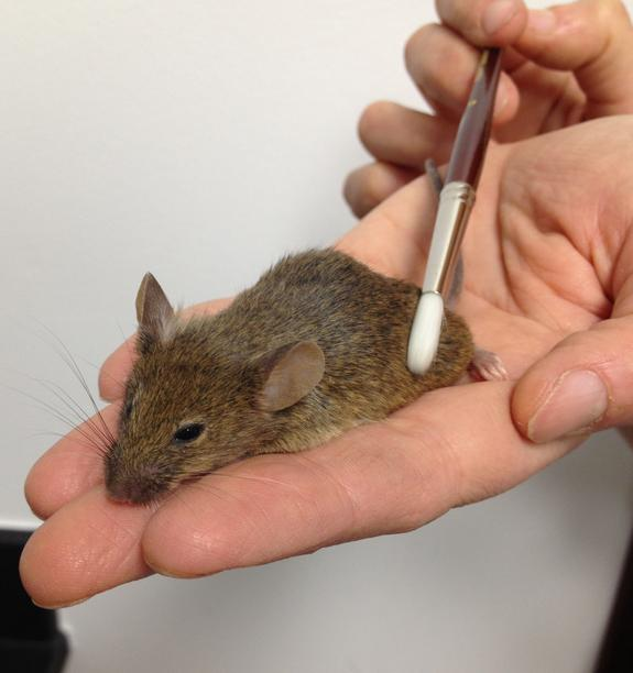 That's the Spot: Massage Neurons Found