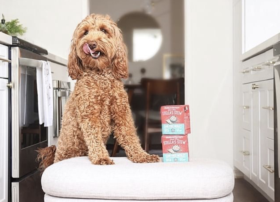 Give your dog a healthy meal they'll enjoy. (Photo: Stella & Chewy)