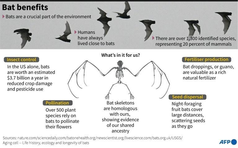 How bats are an integral part of the planet's ecosystems