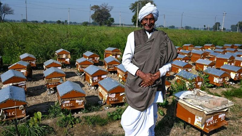 A beekeeper in India