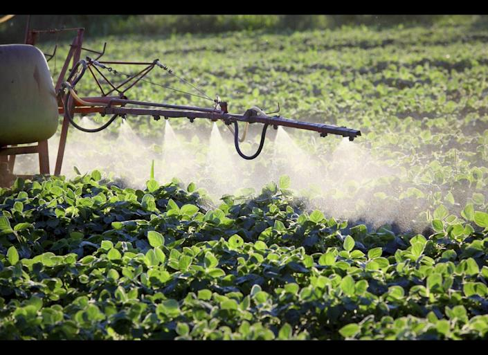 Despite claims from the likes of Monsanto and the biotech industry that GE crops are an environmental panacea and will feed the world, two decades after they first went on sale the evidence suggests that GE's key golden promises are beginning to look more like epic failures…