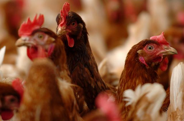 Poultry farmers said they are worried that hens are being slaughtered by families who are offering as little as 25p per bird. (PA)