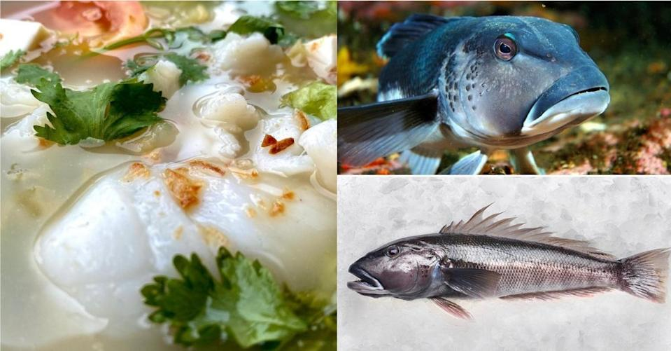 Collage of Qing Feng Yuan fish soup and New Zealand Blue Cod