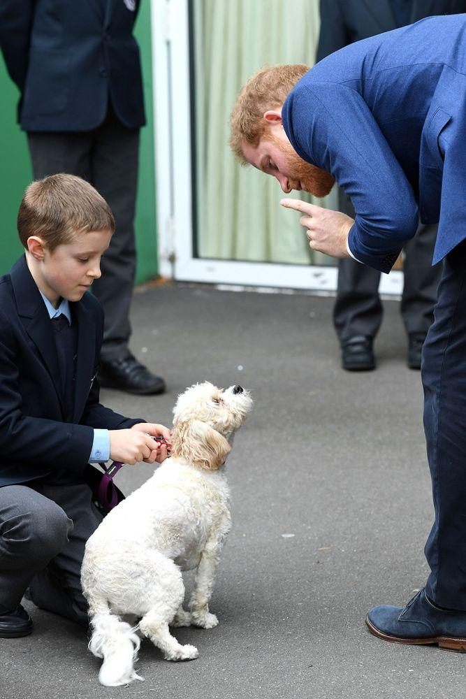 Prince Harry | James Veysey/REX/Shutterstock