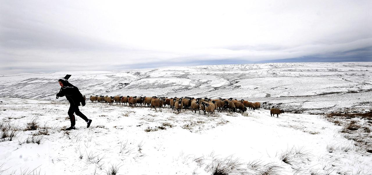 A farmer tends his livestock on the snow covered high ground near Hawes northern England Saturday Feb. 4, 2012. Britain like large areas of Europe are suffering from a cold snap. (AP Photo/ John Giles/PA) UNITED KINGDOM OUT