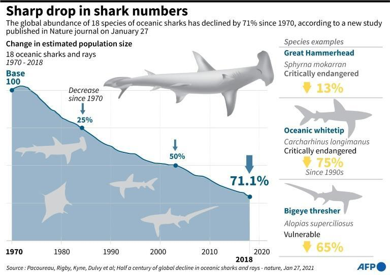 Sharp drop in the number of sharks