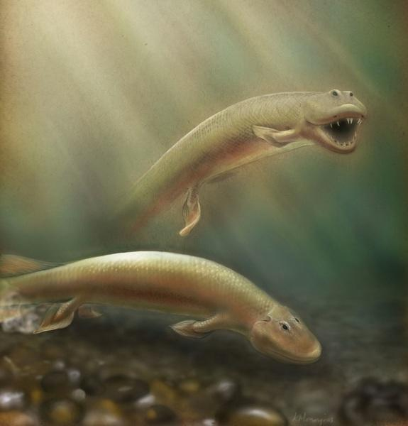 Scientists investigated fossils of a 375-million-year-old fish known as Tiktaalik roseae, discovered in 2004 in northern Canada's Ellesmere Island, finding they may have evolved rear legs before moving to land.