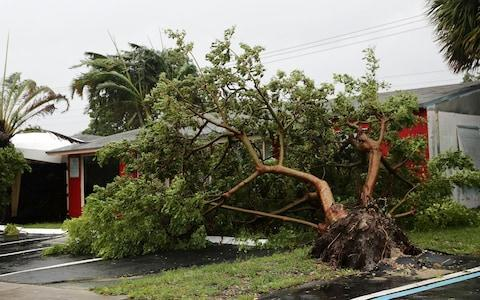 The high winds uprooted trees in Fort Lauderdale - Credit: Getty