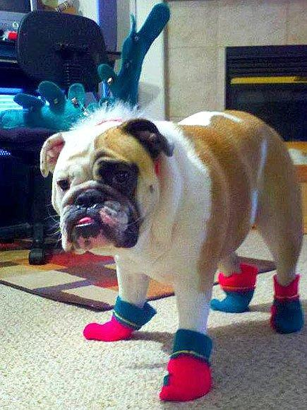 <p>He's not <em>technically</em> wearing a sweater, but ugly Christmas elf shoes count, right? </p>