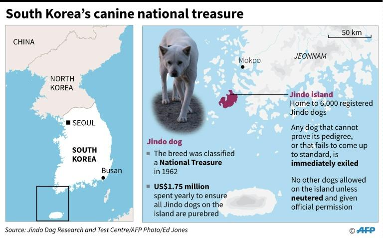 Map locating Jindo island in South Korea, home of a purebreed dog classed as a national treasure