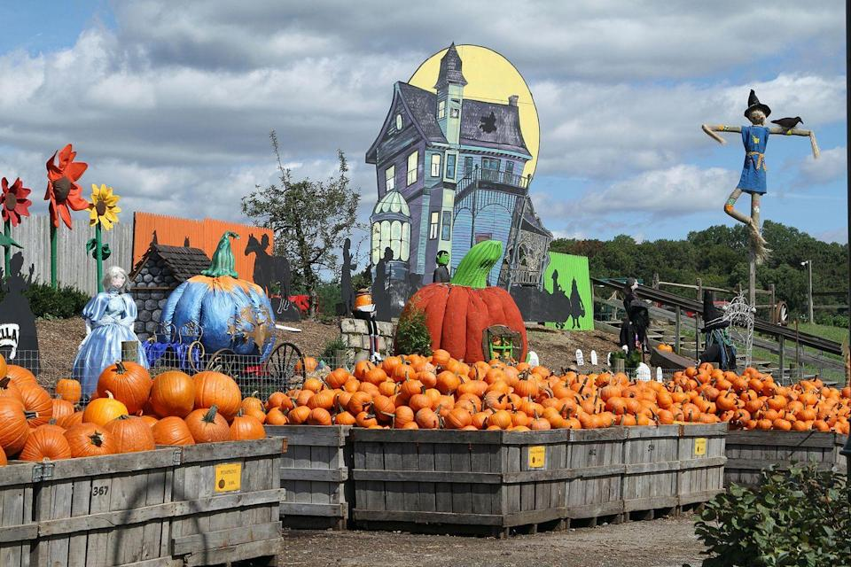 """<p>Folks, get ready to feast! With tons of fall foods—apple cider donuts, freshly baked pies, and seasonal produce—available on site, you'll definitely want to come to this <a href=""""https://go.redirectingat.com?id=74968X1596630&url=https%3A%2F%2Fwww.tripadvisor.com%2FTourism-g53158-Media_Pennsylvania-Vacations.html&sref=https%3A%2F%2Fwww.countryliving.com%2Flife%2Ftravel%2Fg21273436%2Fpumpkin-farms-near-me%2F"""" rel=""""nofollow noopener"""" target=""""_blank"""" data-ylk=""""slk:Media, Pennsylvania"""" class=""""link rapid-noclick-resp"""">Media, Pennsylvania</a>, establishment with an empty stomach. For decades, families have been coming to Philadelphia's <a href=""""https://www.linvilla.com/"""" rel=""""nofollow noopener"""" target=""""_blank"""" data-ylk=""""slk:Linvilla Orchards"""" class=""""link rapid-noclick-resp"""">Linvilla Orchards</a> for their selection of autumnal treats. </p><p><a class=""""link rapid-noclick-resp"""" href=""""https://go.redirectingat.com?id=74968X1596630&url=https%3A%2F%2Fwww.tripadvisor.com%2FAttractions-g53158-Activities-Media_Pennsylvania.html&sref=https%3A%2F%2Fwww.countryliving.com%2Flife%2Ftravel%2Fg21273436%2Fpumpkin-farms-near-me%2F"""" rel=""""nofollow noopener"""" target=""""_blank"""" data-ylk=""""slk:PLAN YOUR TRIP"""">PLAN YOUR TRIP</a><br></p>"""