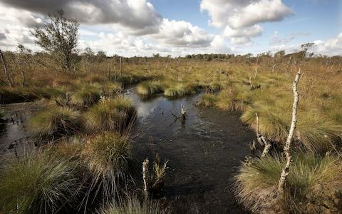 Peatlands act as crucial carbon sinks but have suffered from mismanagement and overuse - Credit: Alamy