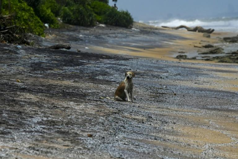 Debris washed ashore from the container ship could destroy mangroves as well as the corals where fish breed in the shallow water, locals fear