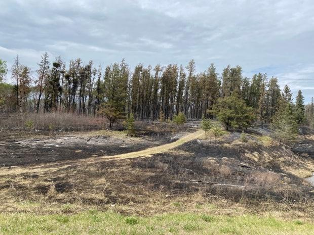 The aftermath of the Cloverdale wildfire, just north of Prince Albert, Sask., in May.  (Albert Couillard/Radio-Canada - image credit)