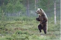 """<p>This bear looks like me when I sneak into the kitchen for midnight snacks. Yes, snacks, plural. <br></p><p><strong>RELATED: </strong><a href=""""https://www.redbookmag.com/life/g4595/beautiful-nature-photos-around-the-world/"""" rel=""""nofollow noopener"""" target=""""_blank"""" data-ylk=""""slk:50 Natural Photos That You Won't Believe Aren't Photoshopped"""" class=""""link rapid-noclick-resp""""><strong>50 Natural Photos That You Won't Believe Aren't Photoshopped</strong></a></p>"""