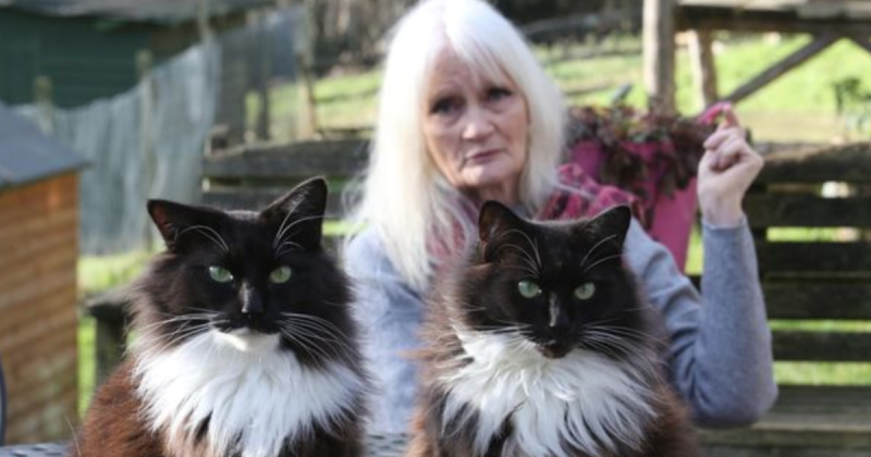 "Police have launched an investigation after a hunt's hounds chased a fox and deer through the grounds of an animal sanctuary, causing dozens of cats to ""flee for their lives""."