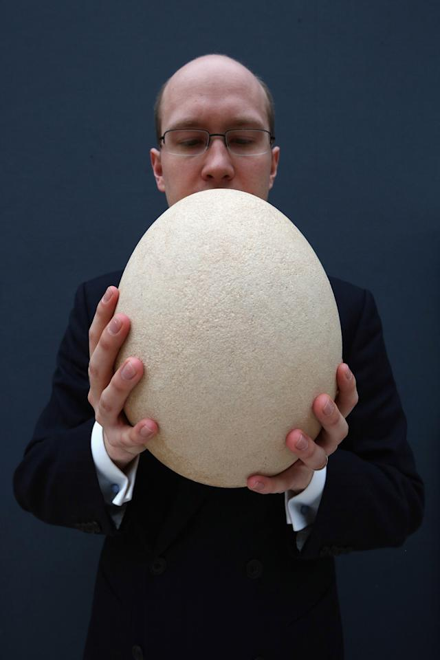 LONDON, ENGLAND - MARCH 27:  James Hyslop, a Scientific Specialist at Christie's auction house holds a complete sub-fossilised elephant bird egg on March 27, 2013 in London, England. The elephant bird egg is expected to fetch 30,000 GBP when it features in Christie's 'Travel, Science and Natural History' sale, which is to be held on April 24, 2013 in London.  (Photo by Oli Scarff/Getty Images)