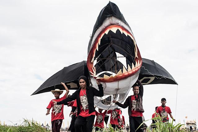 DENPASAR, BALI, INDONESIA - JULY 26: Participants carry a shark shaped kite during the Bali Kite Festival on July 26, 2013 in Denpasar, Bali, Indonesia. The event is a seasonal religious festival, which is intended to send a message to Hindu Gods to create abundant harvests and crops. Aproximately 1121 traditional kites are flown during the three day annual Festival. (Photo by Putu Sayoga/Getty Images)