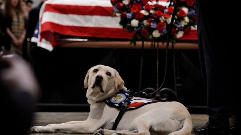 George H. W. Bush's Service Dog Sully Immortalized With Statue in Texas