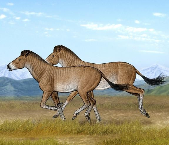 Ancient Horse Bones Tell Story of Tibetan Plateau