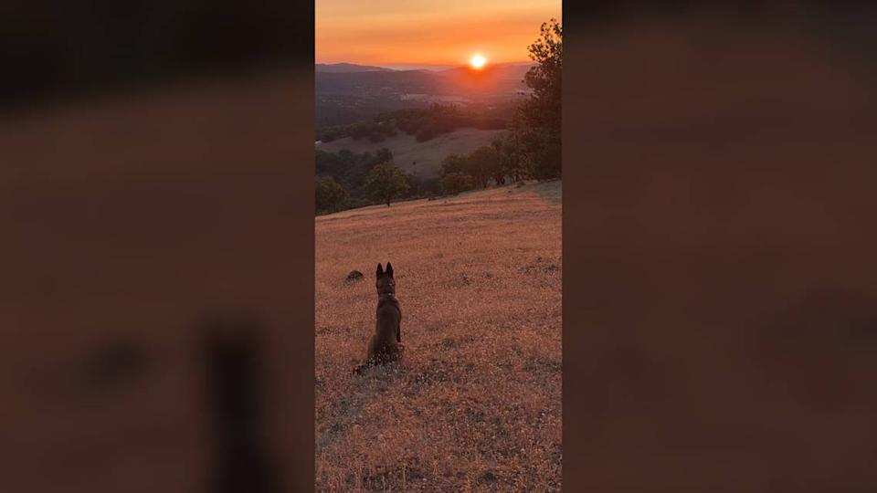 Andrew Pollack's German Shepherd, Sonny, enjoys the views from a 310-acre lot in Eagle Point, Oregon, that Pollack and his wife, Julie Phillips Pollack, plan to purchase. Pollack's daughter, Meadow, was killed in the 2018 Parkland shooting. The family left Broward County in December, frustrated and angered by the actions of police and school administrators there.